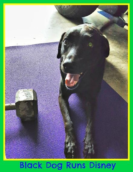Wonder Mutt gym dog.jpg