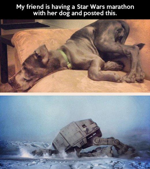 wmw-at-at-dog