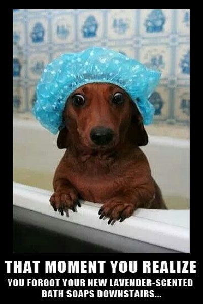 wmw-bath-doxie