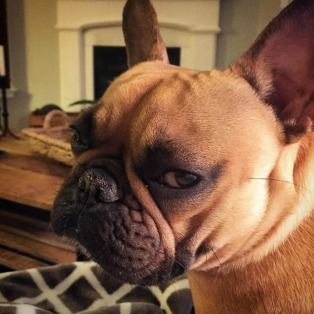 resting-bitch-face-dog-3