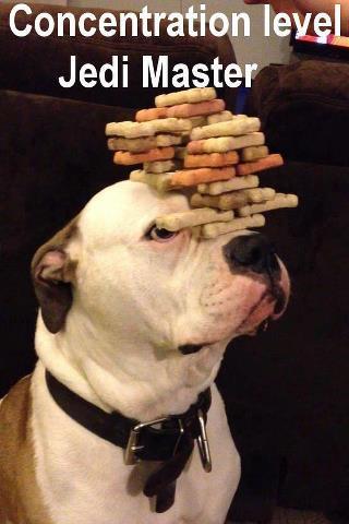 wmw-jedi-master-dog